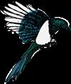 small magpie logo