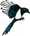 small magpie logo